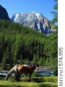 Лошади на Алтае, фото № 574995, снято 27 марта 2007 г. (c) Игорь Потапов / Фотобанк Лори