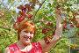 Дачница собирает урожай калины, фото № 2783335, снято 4 сентября 2011 г. (c) Анна Мартынова / Фотобанк Лори
