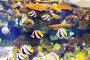 tropical fish at coral reef, фото № 6281607, снято 9 августа 2013 г. (c) Яков Филимонов / Фотобанк Лори