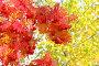 Осенний фон с рябиной, фото № 6424415, снято 21 сентября 2014 г. (c) Икан Леонид / Фотобанк Лори