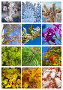 Коллаж. 12 месяцев. Деревья в разные времена года, фото № 6652151, снято 12 ноября 2014 г. (c) Виктория Катьянова / Фотобанк Лори