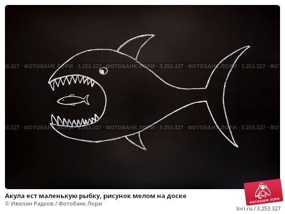 Акула я рисую мелом
