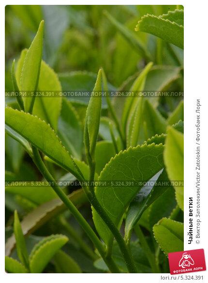 Набор чайный 12 пр ветка орхидеи saguro