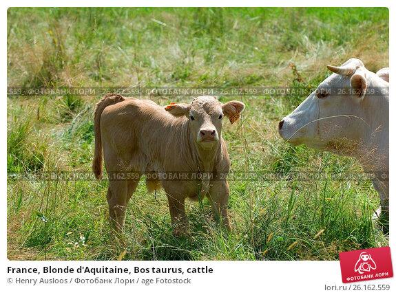 Blonde-aquitaine fr