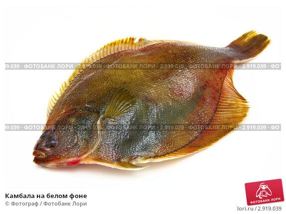 Рыба флаундер фото 5
