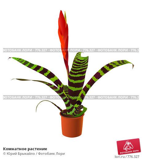 Декорирование комнатных растений