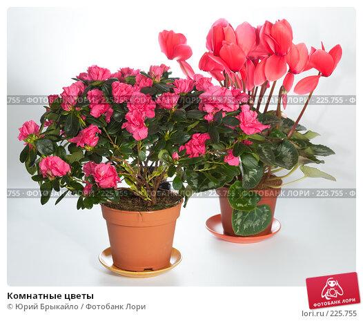 Домашние комнатные цветы и растения