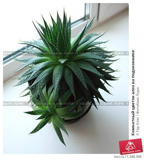 Фото комнатные растения