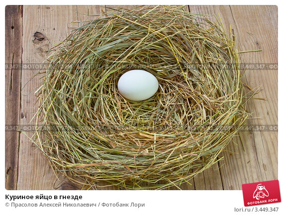 Желтое куриное яйцо в гнезде; фотограф юлия маливанчук; дата съёмки 11 апреля 2012 г; фото 4398509