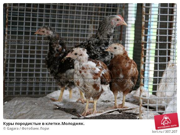 Клетки для молодняка кур и цыплят