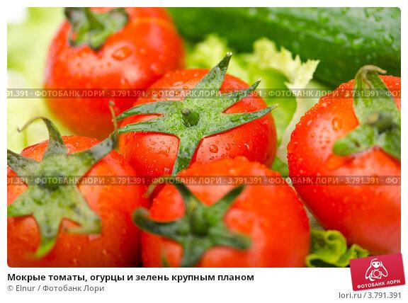 Мокрые томаты, огурцы и зелень крупным планом, фото 3791391, снято 21