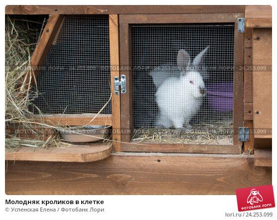 Как сделать клетки для молодняка кроликов