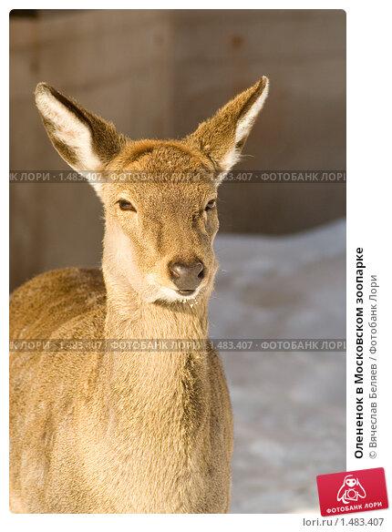 http://prv3.lori-images.net/olenenok-v-moskovskom-zooparke-0001483407-preview.jpg