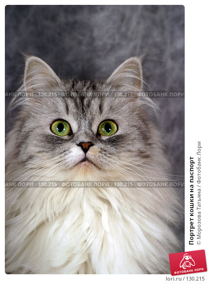 http://prv3.lori-images.net/portret-koshki-na-pasport-0000130215-preview.jpg