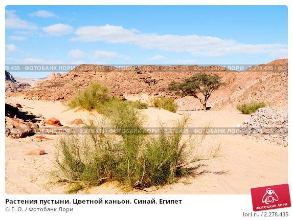 Растения пустыни фото с названиями - 1189f