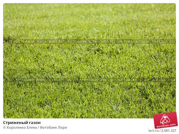 Стриженый газон, фото 2081327, снято 23...