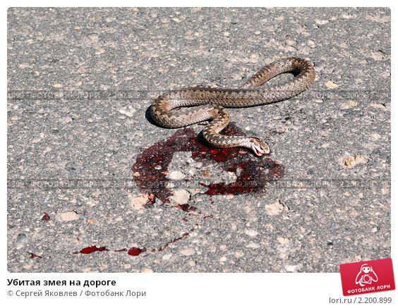 К чему снится убитая змея женщине