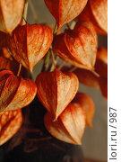 Купить «Сухоцветы», фото № 987, снято 27 февраля 2006 г. (c) Юлия Яковлева / Фотобанк Лори