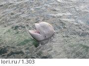 Купить «Радостный дельфин», эксклюзивное фото № 1303, снято 15 сентября 2005 г. (c) Ирина Терентьева / Фотобанк Лори