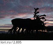 Купить «Силуэты оленей», фото № 2895, снято 2 августа 2005 г. (c) Николай Гернет / Фотобанк Лори