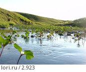 Купить «Горная речка», фото № 2923, снято 14 августа 2005 г. (c) Николай Гернет / Фотобанк Лори
