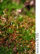 Купить «Лес, зеленый мох, кукушкин лен, молодые побеги», фото № 5155, снято 23 мая 2006 г. (c) Ольга Красавина / Фотобанк Лори
