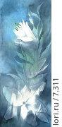 Купить «Лилии, акварель», иллюстрация № 7311 (c) Tamara Kulikova / Фотобанк Лори