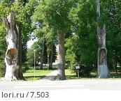 Купить «Парк Паламузе.Эстония», фото № 7503, снято 6 августа 2006 г. (c) Ivan / Фотобанк Лори