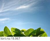 Купить «Зеленая трава и голубое небо», фото № 8067, снято 7 июля 2006 г. (c) Петрова Ольга / Фотобанк Лори