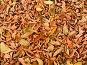 Осенние листья, фото № 9263, снято 28 октября 2016 г. (c) Андрей Жданов / Фотобанк Лори