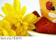 Купить «Натюрморт в желтых тонах на белом», фото № 9611, снято 29 июня 2006 г. (c) Ольга Красавина / Фотобанк Лори