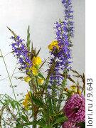 Купить «Лесные и полевые цветы и травы на белом», фото № 9643, снято 24 июля 2006 г. (c) Ольга Красавина / Фотобанк Лори