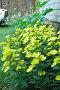 Садовые цветы, фото № 10219, снято 18 июля 2006 г. (c) Юлия Перова / Фотобанк Лори
