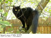 Купить «Черная кошка», фото № 10227, снято 15 июля 2006 г. (c) Юлия Перова / Фотобанк Лори