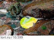 Осенний лист в воде между камнями. Стоковое фото, фотограф Андрей Жданов / Фотобанк Лори