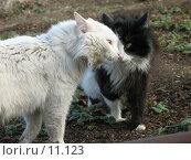 Купить «Два кота беседуют!», фото № 11123, снято 9 апреля 2006 г. (c) Александр Паррус / Фотобанк Лори