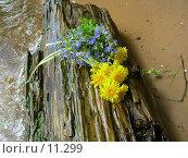Букет цветов на бревне. Стоковое фото, фотограф Екатерина / Фотобанк Лори