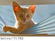 Купить «Котёнок в офисе», фото № 11743, снято 30 апреля 2006 г. (c) Vladimir Suponev / Фотобанк Лори