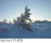 Купить «Лучи Солнца сквозь еловые ветки», фото № 11879, снято 2 ноября 2006 г. (c) Виталий Матонин / Фотобанк Лори