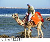Араб на верблюде (2006 год). Редакционное фото, фотограф Екатерина / Фотобанк Лори
