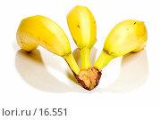 Купить «Бананы, вид с тыла», фото № 16551, снято 11 февраля 2007 г. (c) Угоренков Александр / Фотобанк Лори