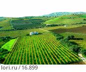 Купить «Виноградники», фото № 16899, снято 6 ноября 2006 г. (c) Маргарита Лир / Фотобанк Лори