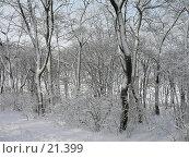Купить «Деревья в снегу», фото № 21399, снято 31 января 2007 г. (c) Давыдова Нина / Фотобанк Лори