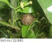 Купить «Улитка среди листвы», фото № 22843, снято 10 мая 2006 г. (c) Golden_Tulip / Фотобанк Лори