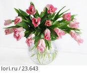 Купить «Красивый букет розовых тюльпанов в стеклянной вазе на белом фоне», фото № 23643, снято 8 марта 2007 г. (c) Ольга Хорькова / Фотобанк Лори