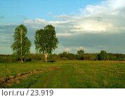 Купить «Русское поле», эксклюзивное фото № 23919, снято 18 февраля 2018 г. (c) Александр Тараканов / Фотобанк Лори
