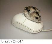 Купить «Мышь и джунгарский хомячок», фото № 24647, снято 18 марта 2007 г. (c) Fro / Фотобанк Лори