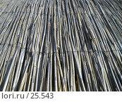 Купить «Камыш», фото № 25543, снято 21 марта 2007 г. (c) Светлана / Фотобанк Лори