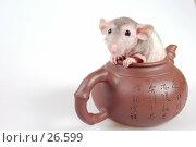 Купить «Лысая крыса в глиняном чайнике», фото № 26599, снято 18 марта 2007 г. (c) Golden_Tulip / Фотобанк Лори