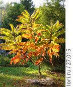 Купить «Разноцветное лиственное дерево», фото № 27015, снято 23 января 2018 г. (c) SummeRain / Фотобанк Лори